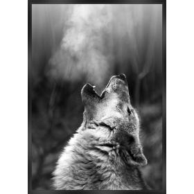 Wolf close-up print